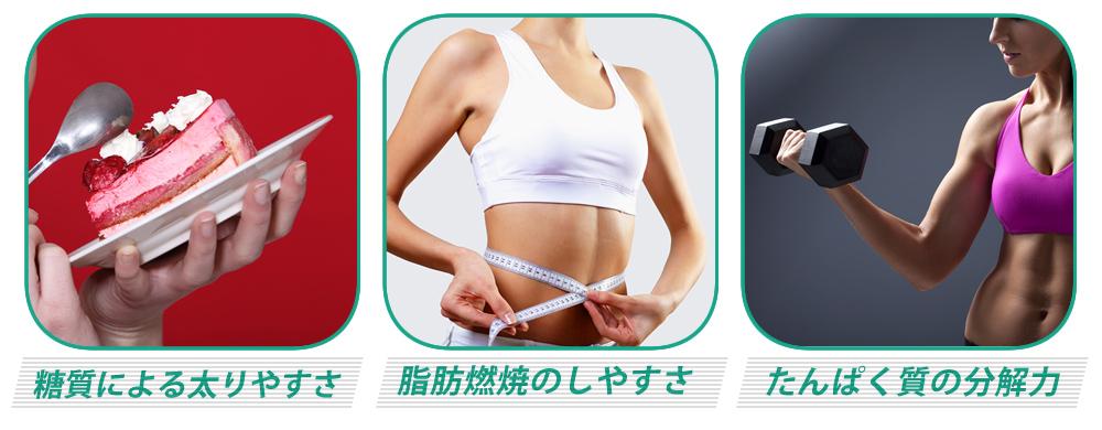 糖質による太りやすさ、脂肪燃焼のしやすさ、たんぱく質の分解力